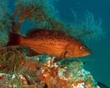Aida Gonzales Memorial Reef - MB139