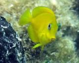 Florida Keys Underwater