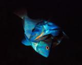 Belize Diving 2014