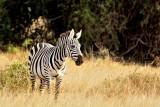 Kenya  2014 Aug