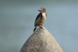 nature birds  2014