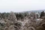 ice_storm_dec_13