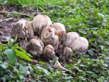Mess of Mushrooms