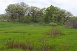 Fen Landscape