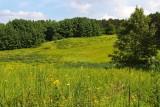 Prairie Pasture