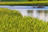 Water Through the Wetland