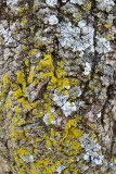 Lichen or Not