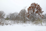 Snow on the Scene