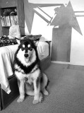 BALTO WONG AT 7 MONTHS