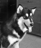 BALTO AT 8 MONTHS