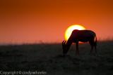 Topi in the sunset _L6H2660.jpg