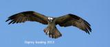 osprey_bandingwe_energies