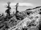 Mammoth Hot Springs Terraces-BnW