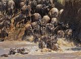 KENYA   ---     Maasai Mara N.R.  and lake Nakuru N.P.-