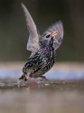 BIRDS 2 ******************************
