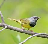 Mid-west Birds, Mammals, Wildflowers,Butterflies