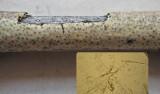 Cryptosphaeria eunomia on ash twig ClarboroughNR Feb-14 HW m.jpg