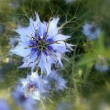floral_dance