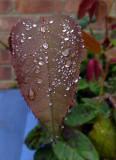 Trembling raindrops