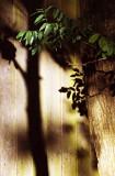 Shadows in my garden