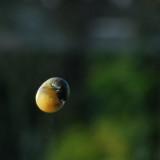 Snail-rise