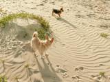 Mona and Leo at Pismo Beach