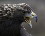 Canadian Raptor Conservancy