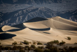 Desert Life:  restoration through sparseness ...