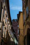 Tower of Guinigis, Lucca  14_d800_0752