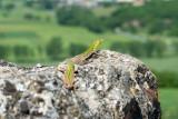 Lizard view from Monteriggioni  14_d800_1983