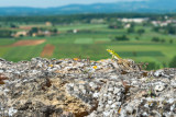 Lizard view from Monteriggioni  14_d800_1992
