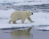 Spitsbergen 2016 - Svalbard 2016
