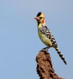 birds_of_ethiopia