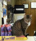 vet office cat while I wait