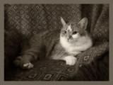 20130806_211509 Beegie