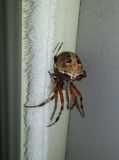 20131011_132025 Pretty Little Spider