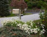 PA120009 Challenge Mailbox