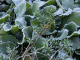_A260011 Morning Frost