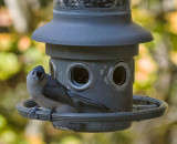 _MG_9094 Titmouse
