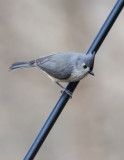 _MG_9802 Titmouse