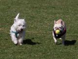 P3310025 Dog park Fun