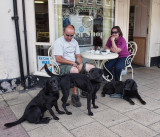 Three Labs in Bedale