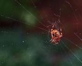 P9050032 Spider on web