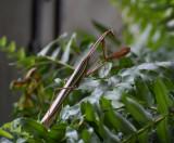 SIL90225 Surprise in my fern