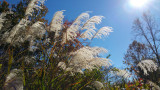 20141025_112049 Weed Grass