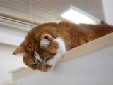 P1020325 Hanging Cat