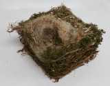 Chickadee nest removed from bluebird nest box