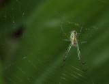 P1050211 Bejeweled Spider