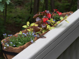SIL80060 New Horse Trough Planter Box