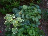 P1090921 My Favorite Garden Spot